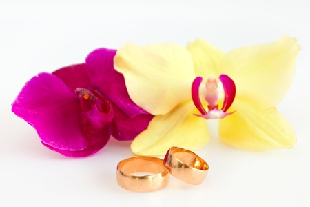 Two wedding rings isolated on white with orchids for background photo