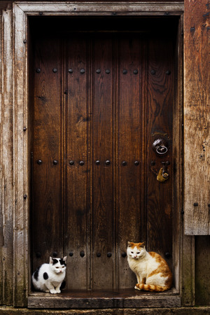 go inside: Cats waiting to go inside  Cats sitting by a Barn door Stock Photo