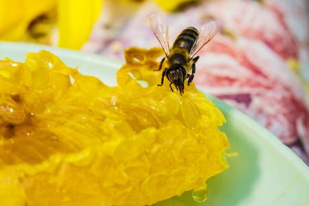 proboscis: Bee gathering honey and nectar with proboscis. Stock Photo