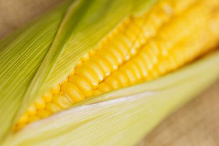 Ears of fresh corn. Close up of sweet corn 版權商用圖片