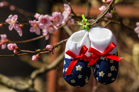 gestation: Baby slippers hanging on a branch of blossoming tree