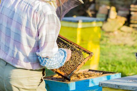 Beekeeping - Beekeeper checking hive Stok Fotoğraf
