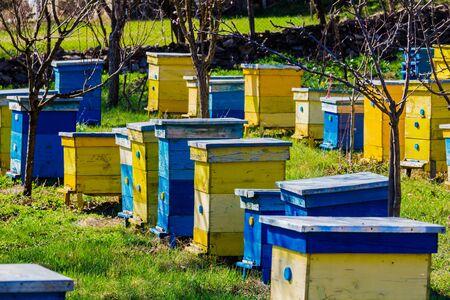Blue and yellow beehives in garden. Standard-Bild