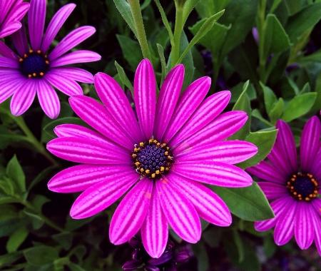 Big purple flower