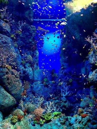 Fish tank with many colourful fishes photo