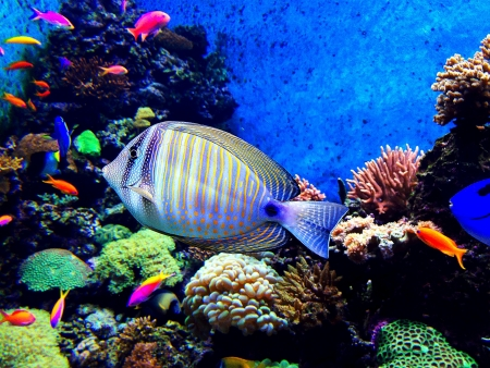 Fish in an aquarium Stock Photo - 18970276