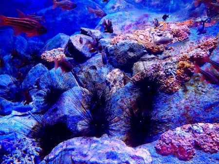 Sea urchins in an aquarium