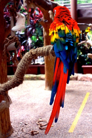 Colourful parrot Stock Photo - 19455608