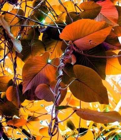 Orange colour leaves and interlocking twines
