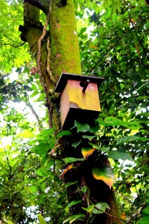 Bird box on the tree