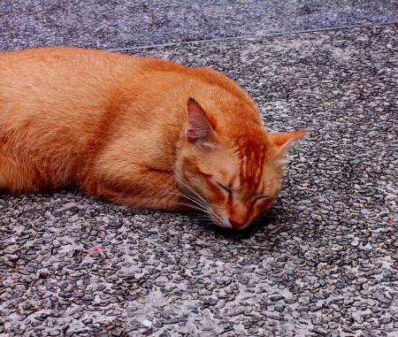 Stray cat sleeping on the street Stock Photo