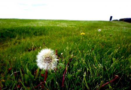 Flower in the open field