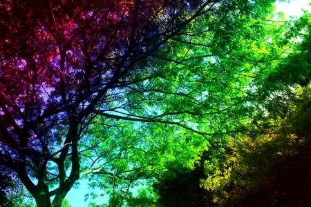 Colourful trees Stock Photo