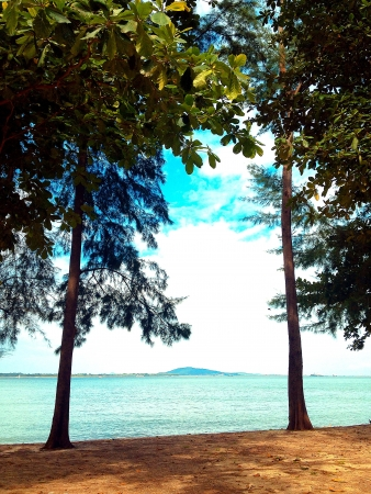 Trees by the seaside
