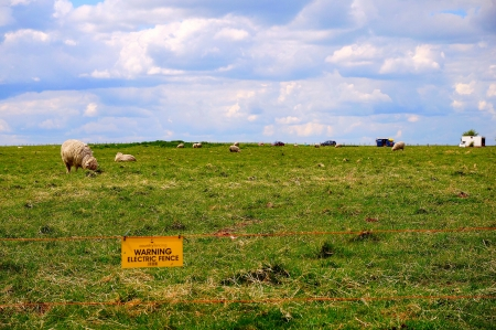 Open field with sheep