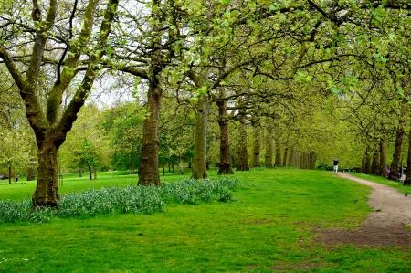 Man running in the park