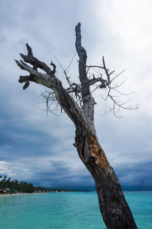 Tree by the beach with blue sky