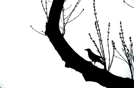 perching: Crow Stock Photo
