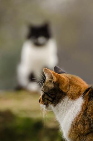 sexual activity: cat