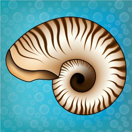 Nautilus sur une bulles