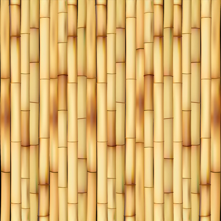 bamboo forest: bamboo Illustration