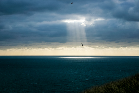 A shaft of light breaking through the dark clouds, spotlighting a flying bird.  Provides imagery of hope, faith, religion