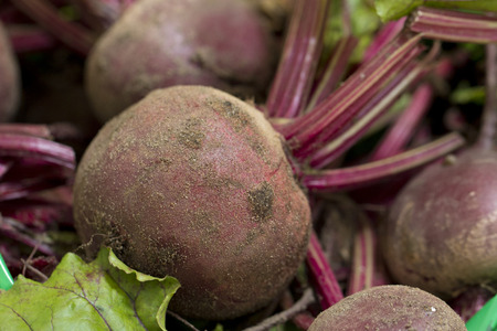 unwashed: A close up image of freshly harvested, unwashed beetroot