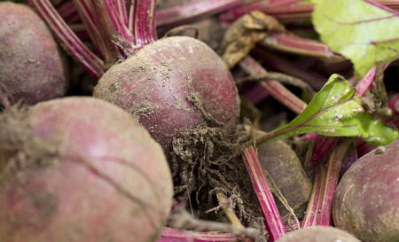 close up image: A close up image of freshly harvested, unwashed beetroot