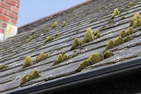 Green moss on slate roof tiles Reklamní fotografie