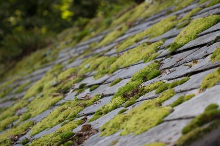 slate roof: Green moss on slate roof tiles Stock Photo