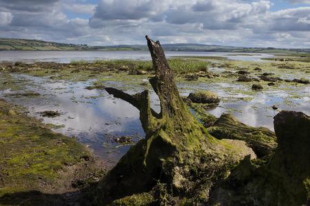 inhospitable: Remote wetland in Ireland