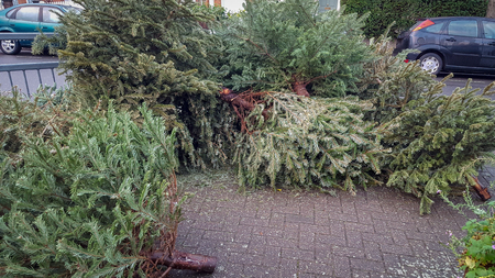 Discarded christmas trees on a residential street