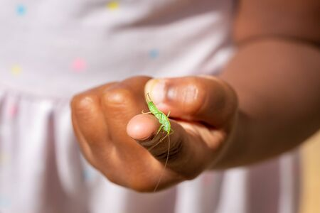 Single male Meconema thalassinum, known as the oak bush-cricket or drumming katydid, on a childs finger