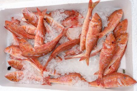 Fresh red mullet for sale in a UK fishmonger market stall 스톡 콘텐츠