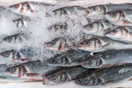 Fresh sea bass, Dicentrarchus labrax, on display on a UK fishmonger market stall