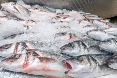Fresh sea bass, Dicentrarchus labrax, on display on a UK fishmonger market stall
