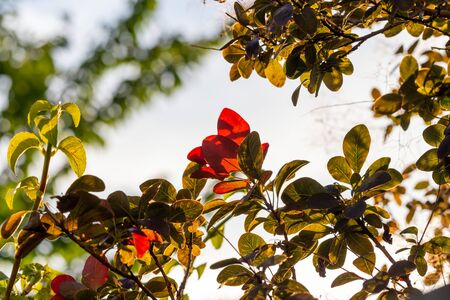 Green and red leaves backlit by the sun Reklamní fotografie