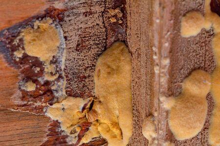 Wood mould growing inside a garden shed Reklamní fotografie