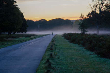 Cyclists riding through fog at sunrise , in Richmond Park, Surrey, England