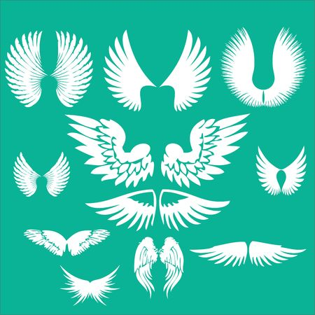Wings Clip art Vector