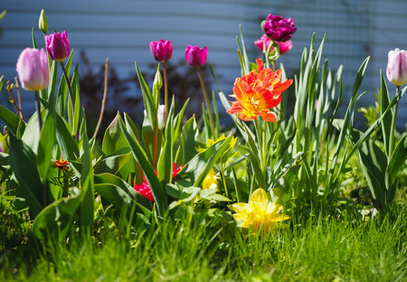 bright summer spring flowers in the garden Stock Photo