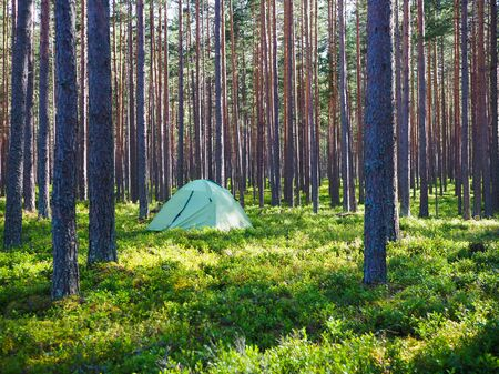 one tent is in the woods summer camping trip Imagens