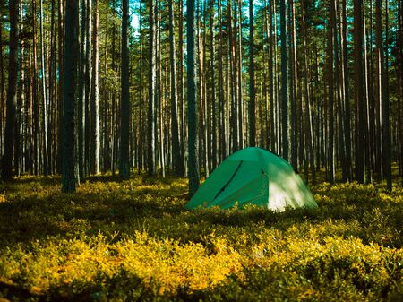 one tent is in the woods summer camping trip Stock fotó