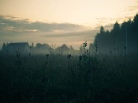 evening landscape with fog in a wild field with herbs