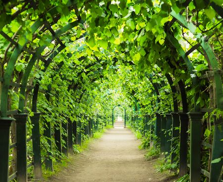 arch tunnel of greenery stretching away into the distance