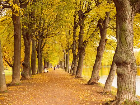 beautiful colorful autumn landscape with an alley of ancient trees