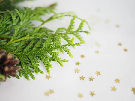 Christmas background. green spruce twigs with gold ribbon lie on a white background