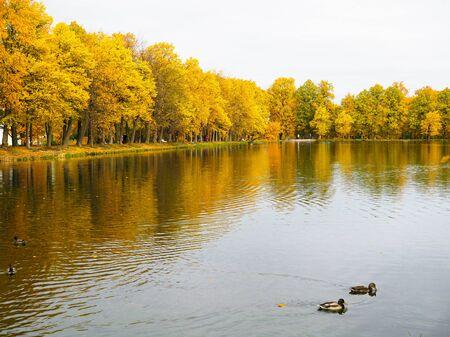 beautiful colorful autumn orange landscape with lake Stok Fotoğraf
