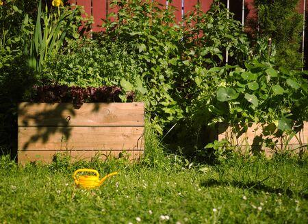 garden flowers grass vegetables grow in wooden beds. kitchen-garden