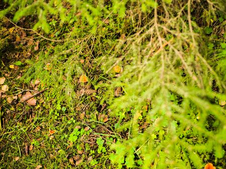 plants in the forest, moss, mushrooms, leaves.